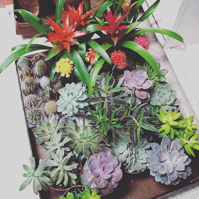 Now onto unpacking our new plant shipment #cactus #bromeliad #succulents #sagopalm #pammettsflowers #ptbolove #tropicalvibes #green