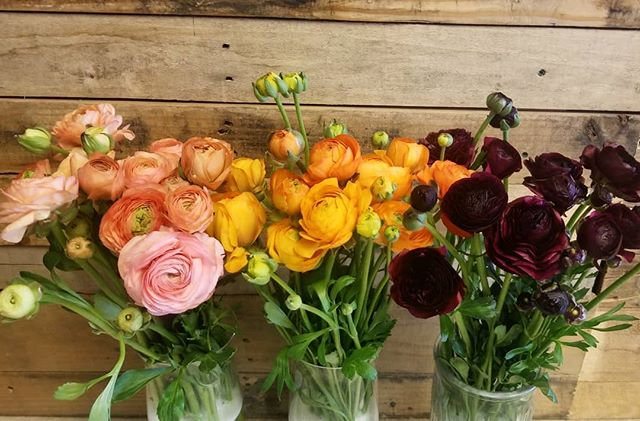 These beauties can brighten up the greatest day 😍  #ranunculus #springflowers #pammettsflowers #downtownptbo #spring #shoplocal