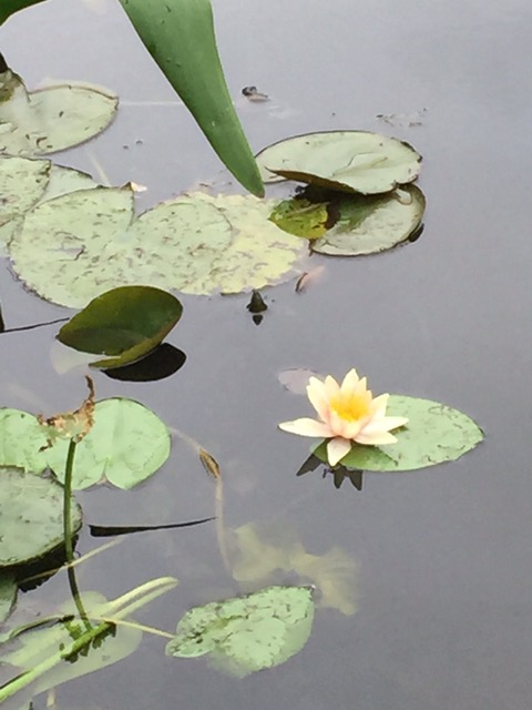 Jo Solet_Monet's Garden.jpeg