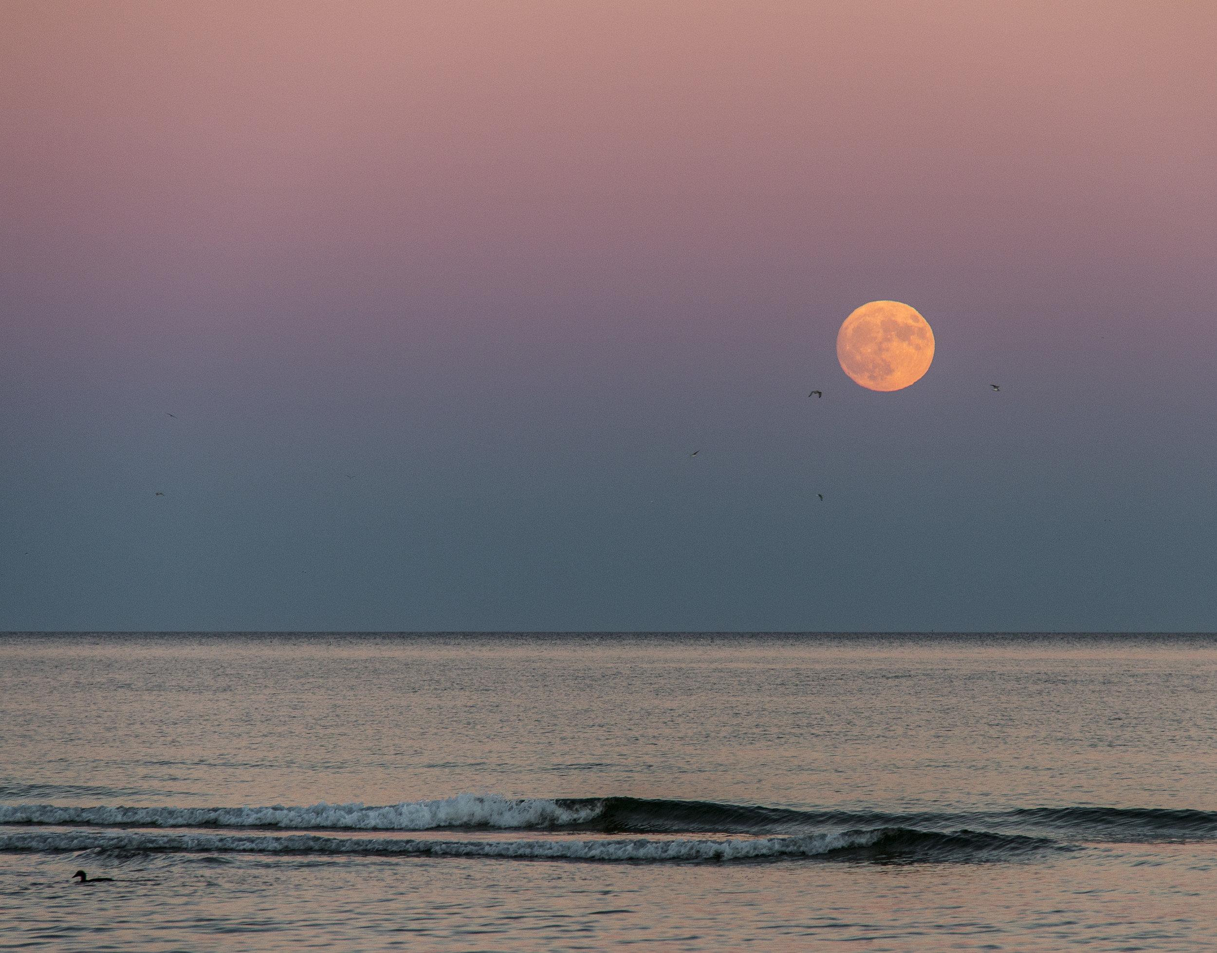 Rose Goldman_Moonrise at sunset.jpg