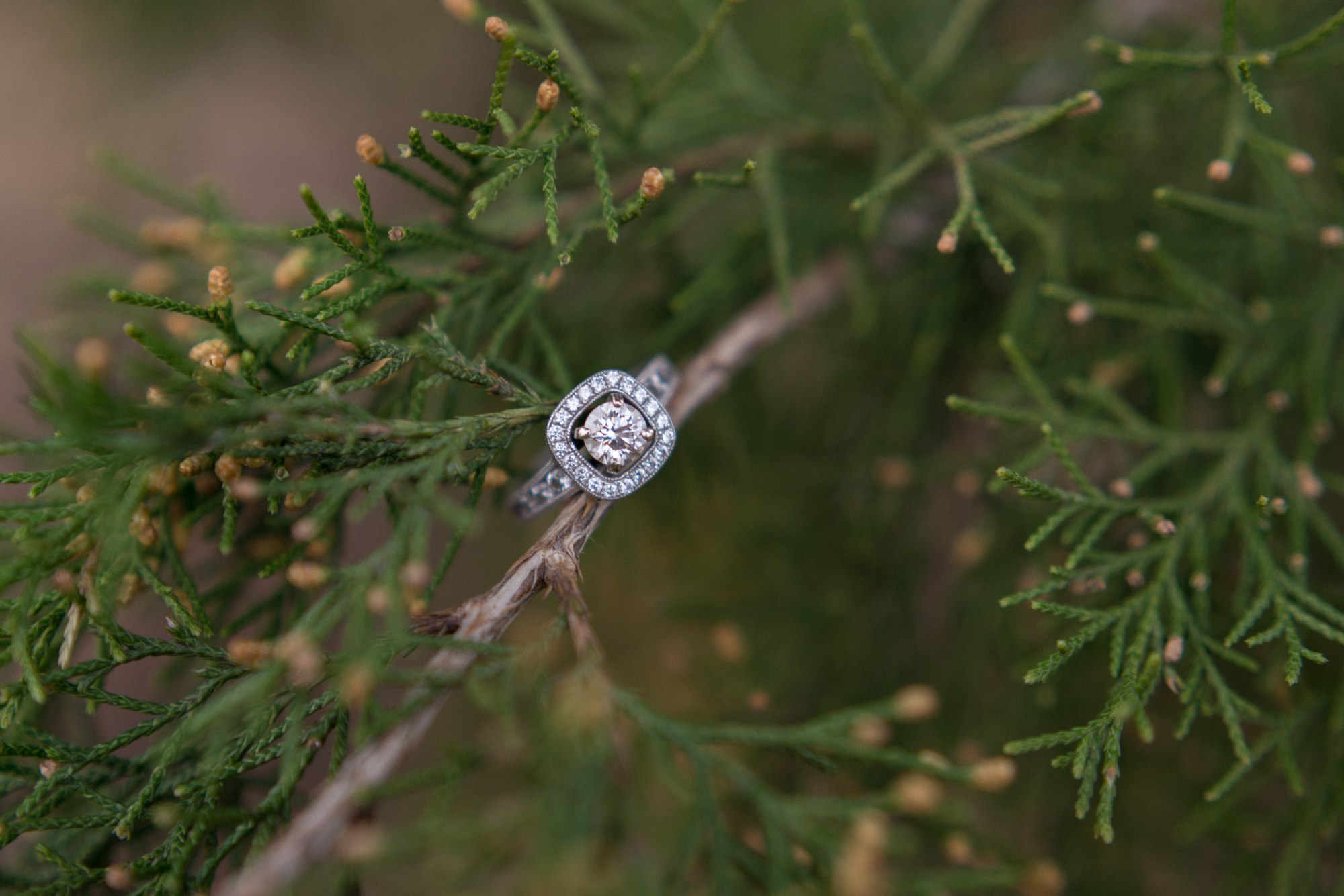 Engagement Ring in a cedar tree