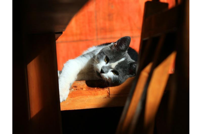 cat-56753_1280.jpg