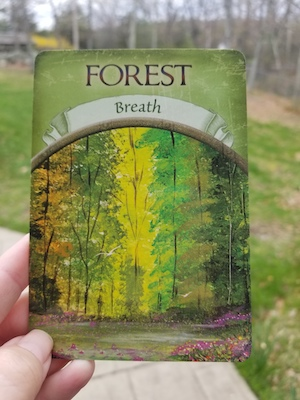 FOREST - BREATH - Earth Magic Oracle by Steven D. Farmer
