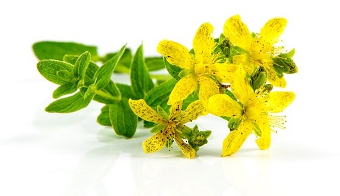 St. John's Wort, herb, flower essence
