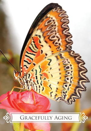 GRACEFULLY AGING: Butterfly Oracle for Life Changes