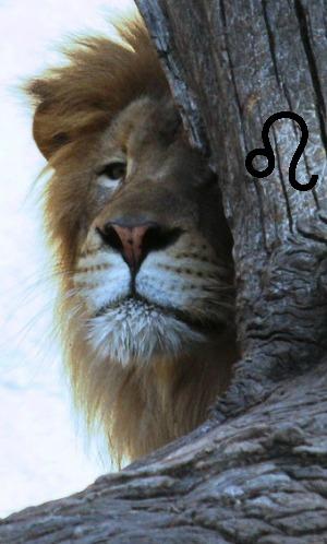 Leo, horoscope, Leo the Lion, July - August zodiac