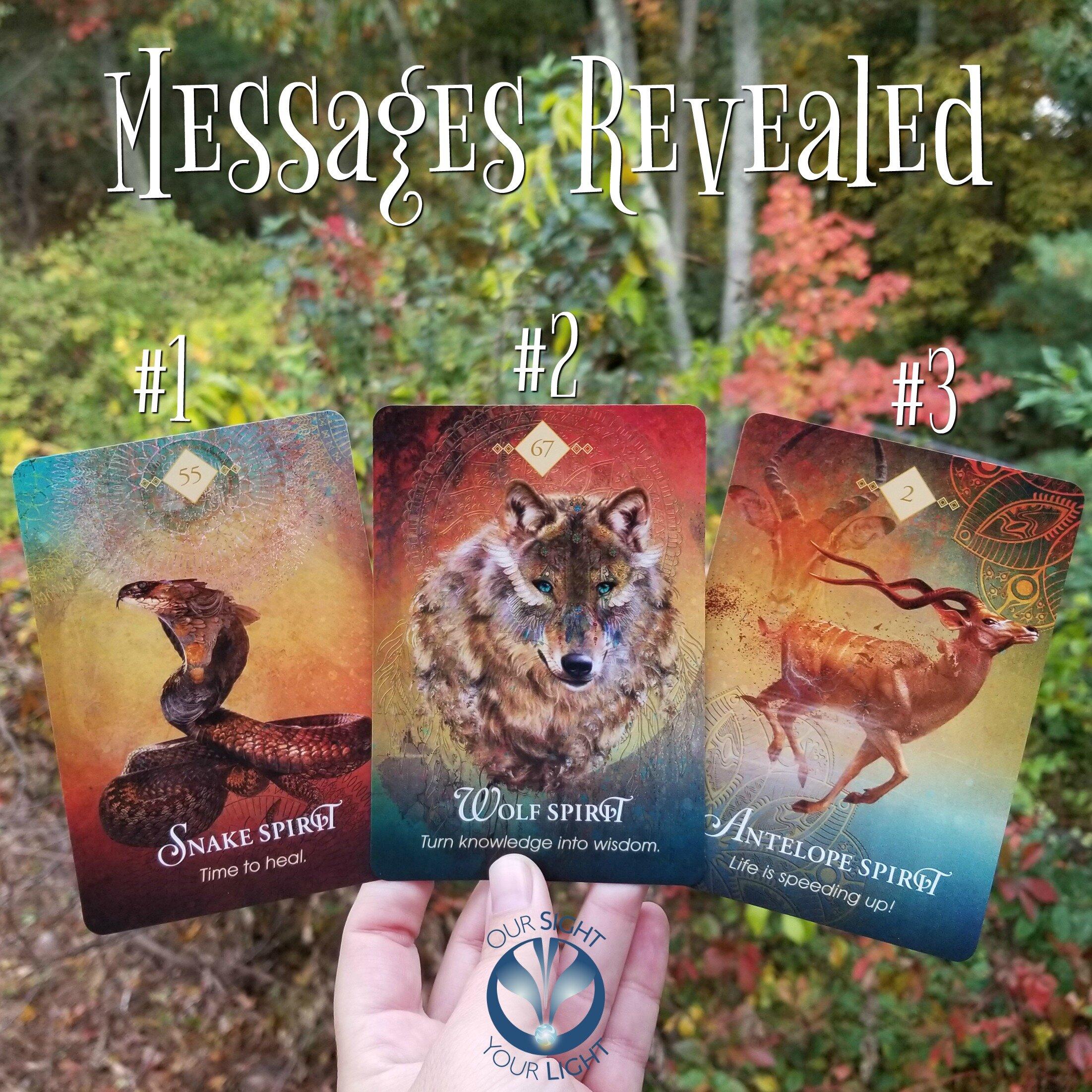 #OracleMonday Messages Revealed - SPIRIT ANIMAL ORACLE by Colette Baron-Reid, Snake Spirit, Wolf Spirit, Antelope Spirit