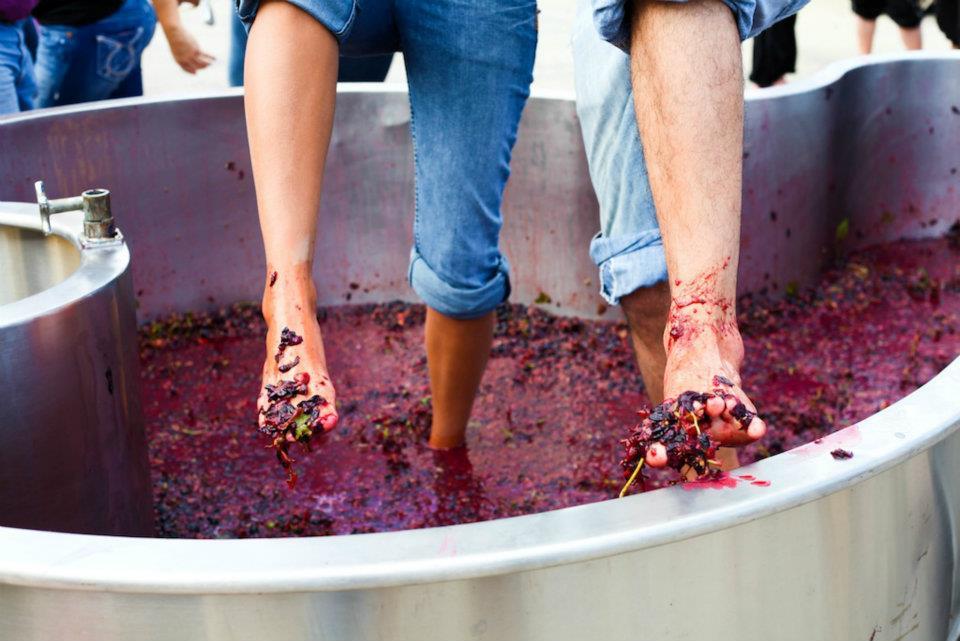 Summerset Winery Harvest grape stomping EMAN PHOTO.jpg
