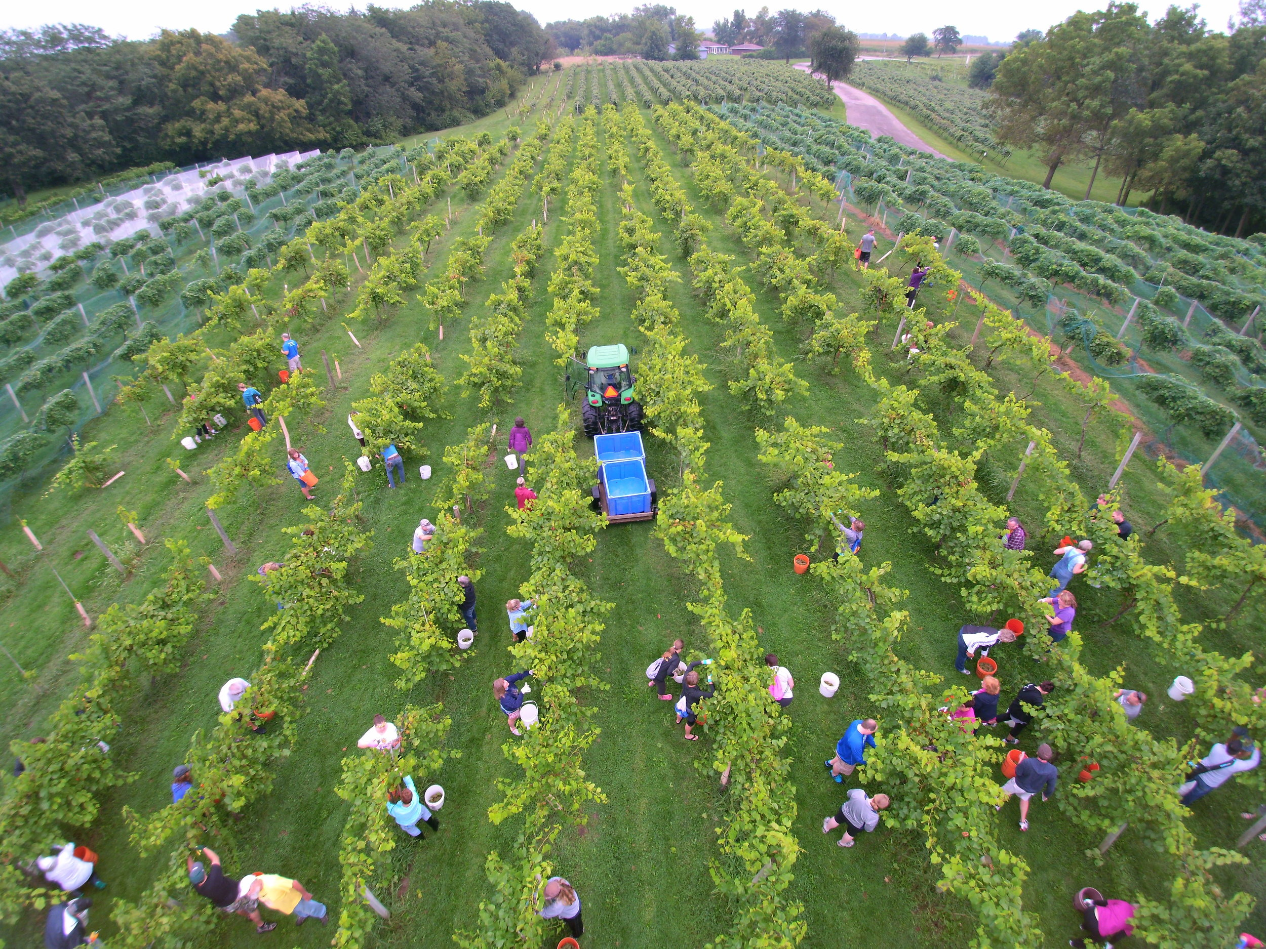 Summerset Winery Harvest Drone View.jpg