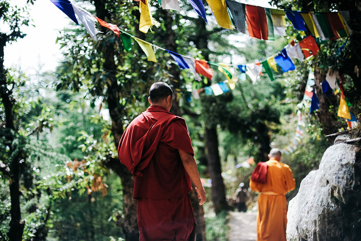 Buddhist monks walk down a forest path