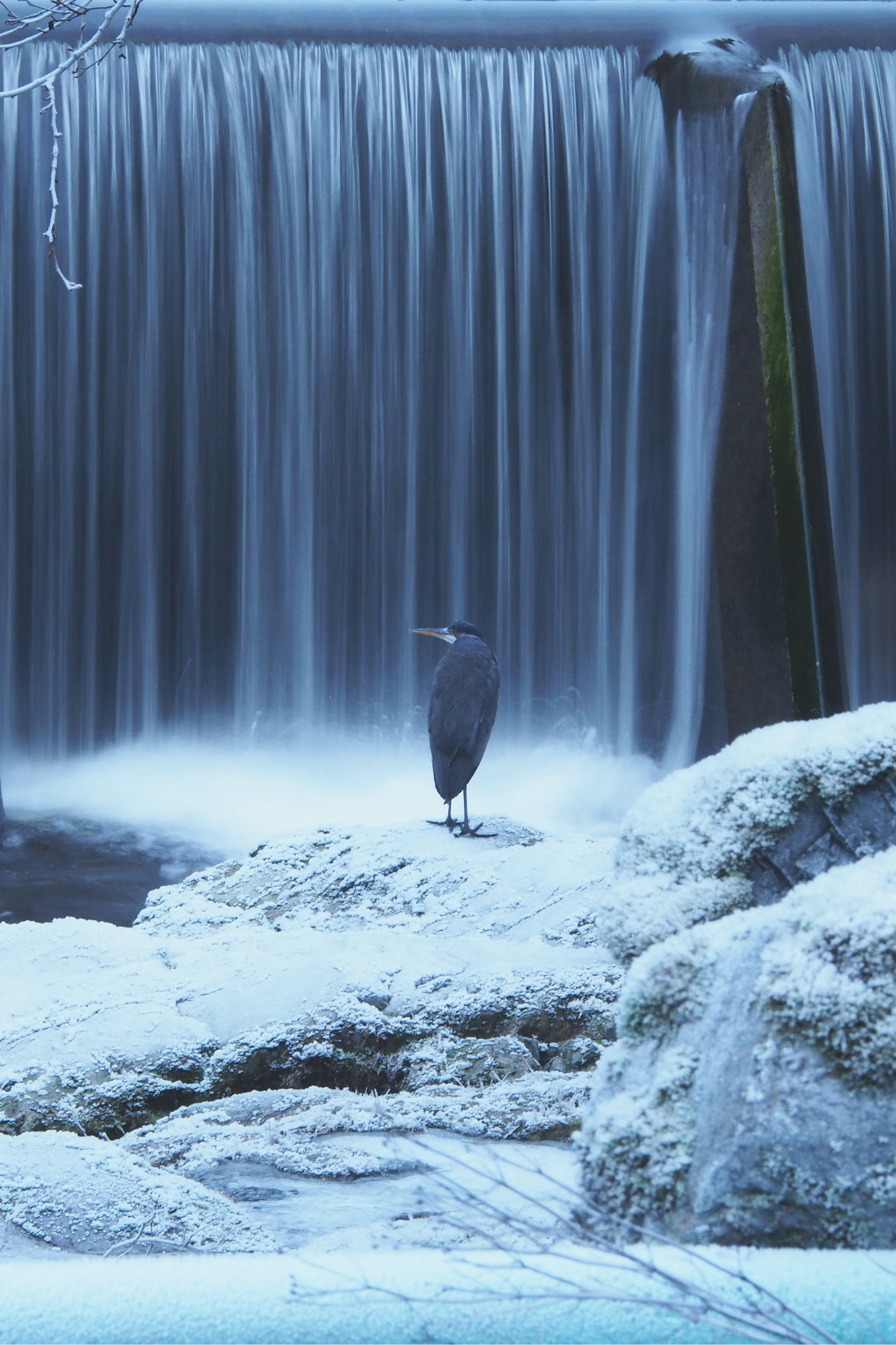 Heron 8X12.jpg