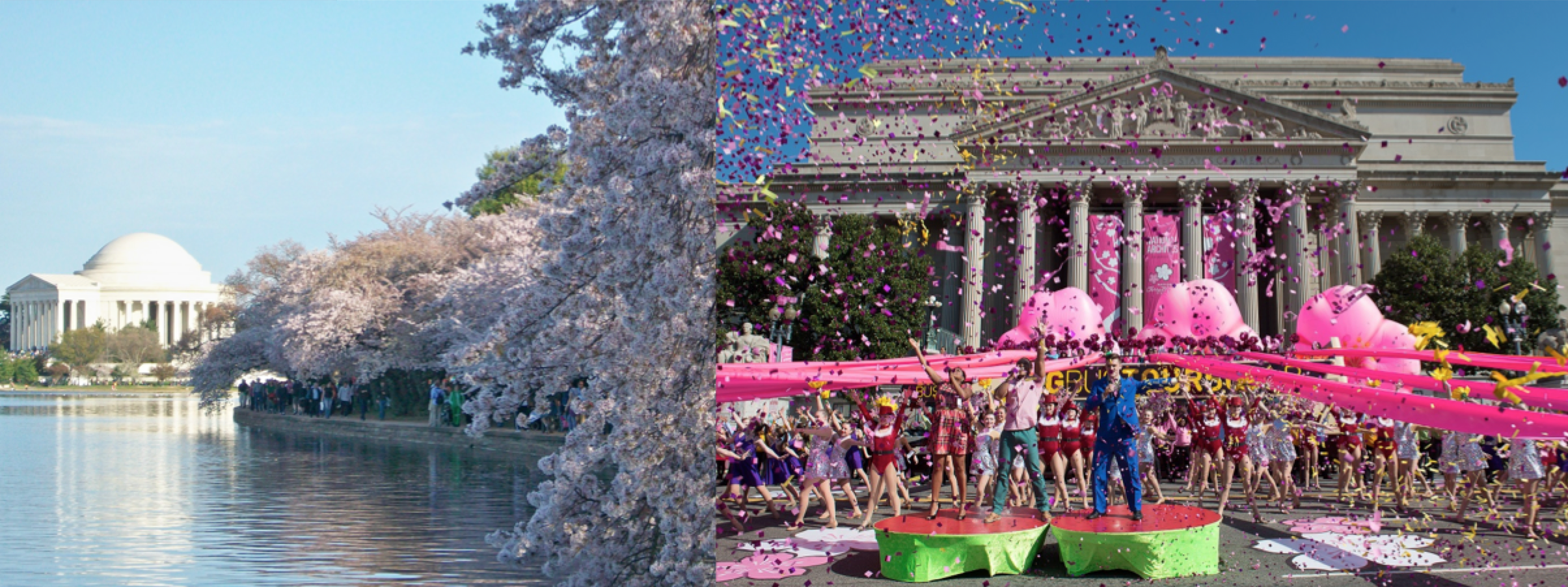 National Cherry Blossom Composite.png