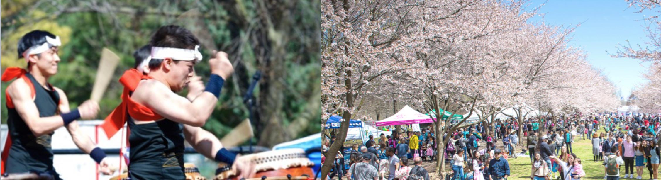 Sakura Sunday in Philadelphia