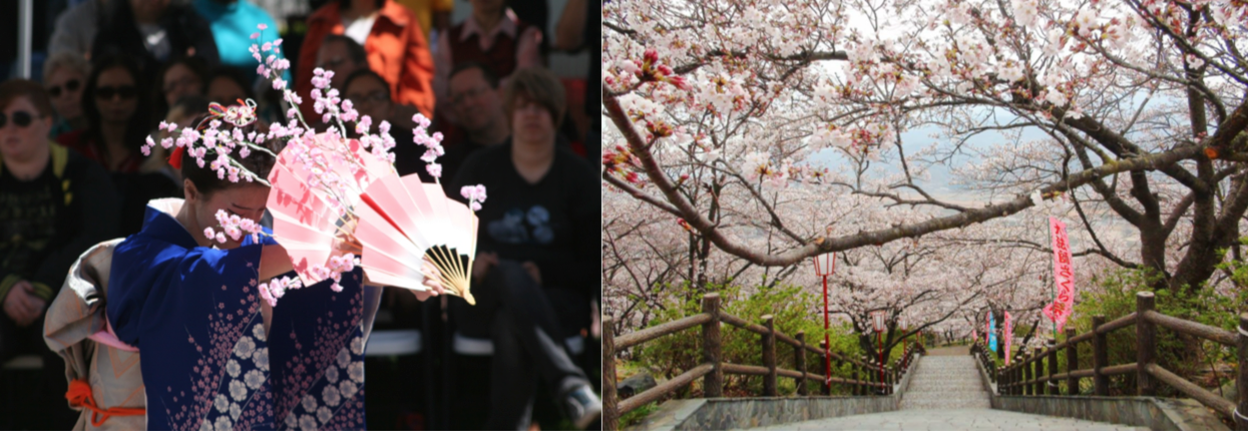 Japanese Cherry Blossom Festival at the Bowers Museum