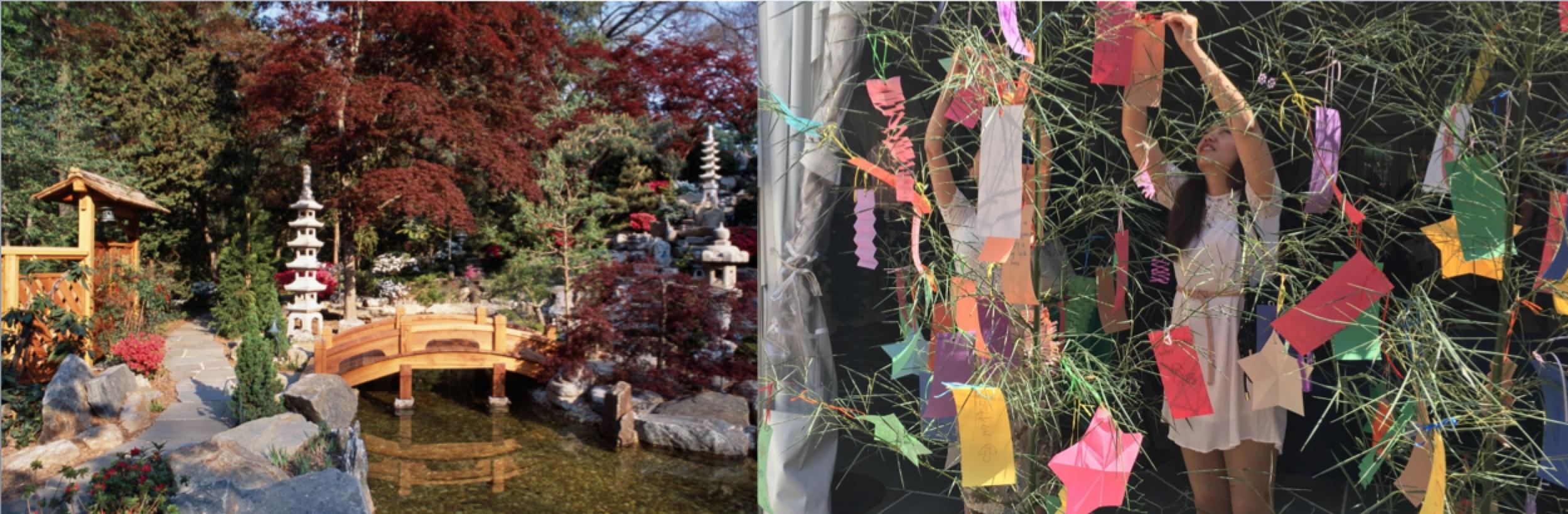 Hillwood Gardens composite for Arts Japan Summer Festivals article 2019.png
