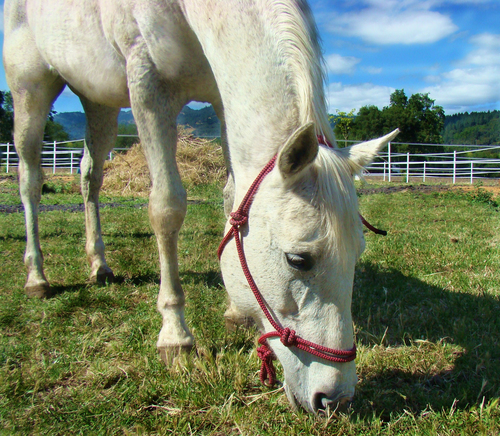Sunrise Horse Rescue -