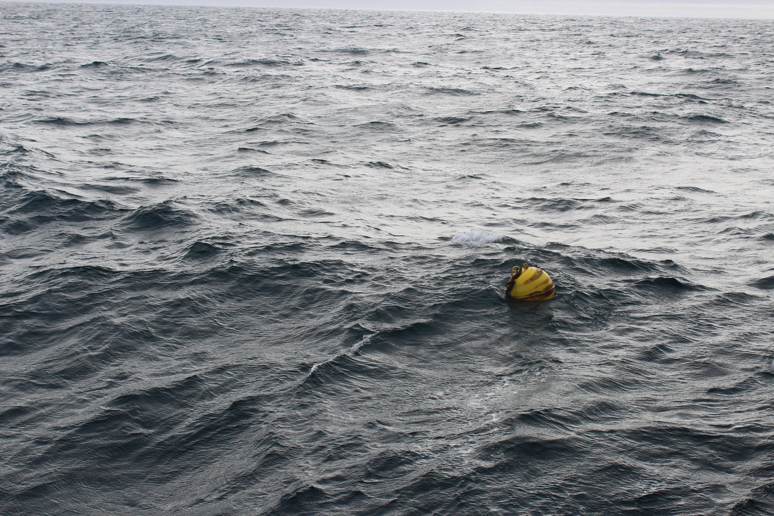 The first of many mooring buoys waiting to be brought on board for data analysis. Photo credit: Harmony Wayner