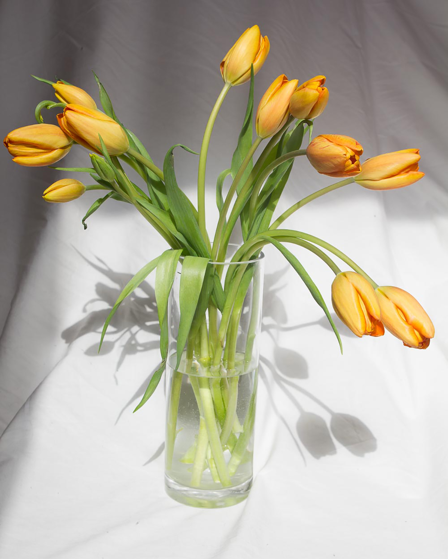 Orange Tulips Final.jpg