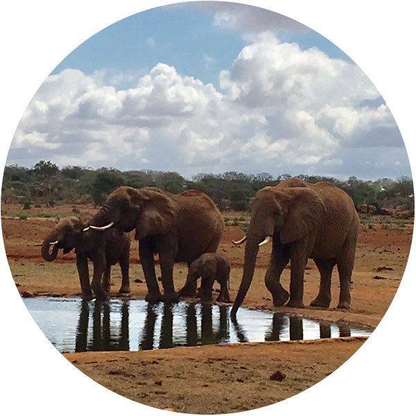 Conservancy creation - Amara develops designated protected areas for wildlife. This prevents the encroachment of animals on to community land and reduces the incidence of both human and wildlife fatalities.