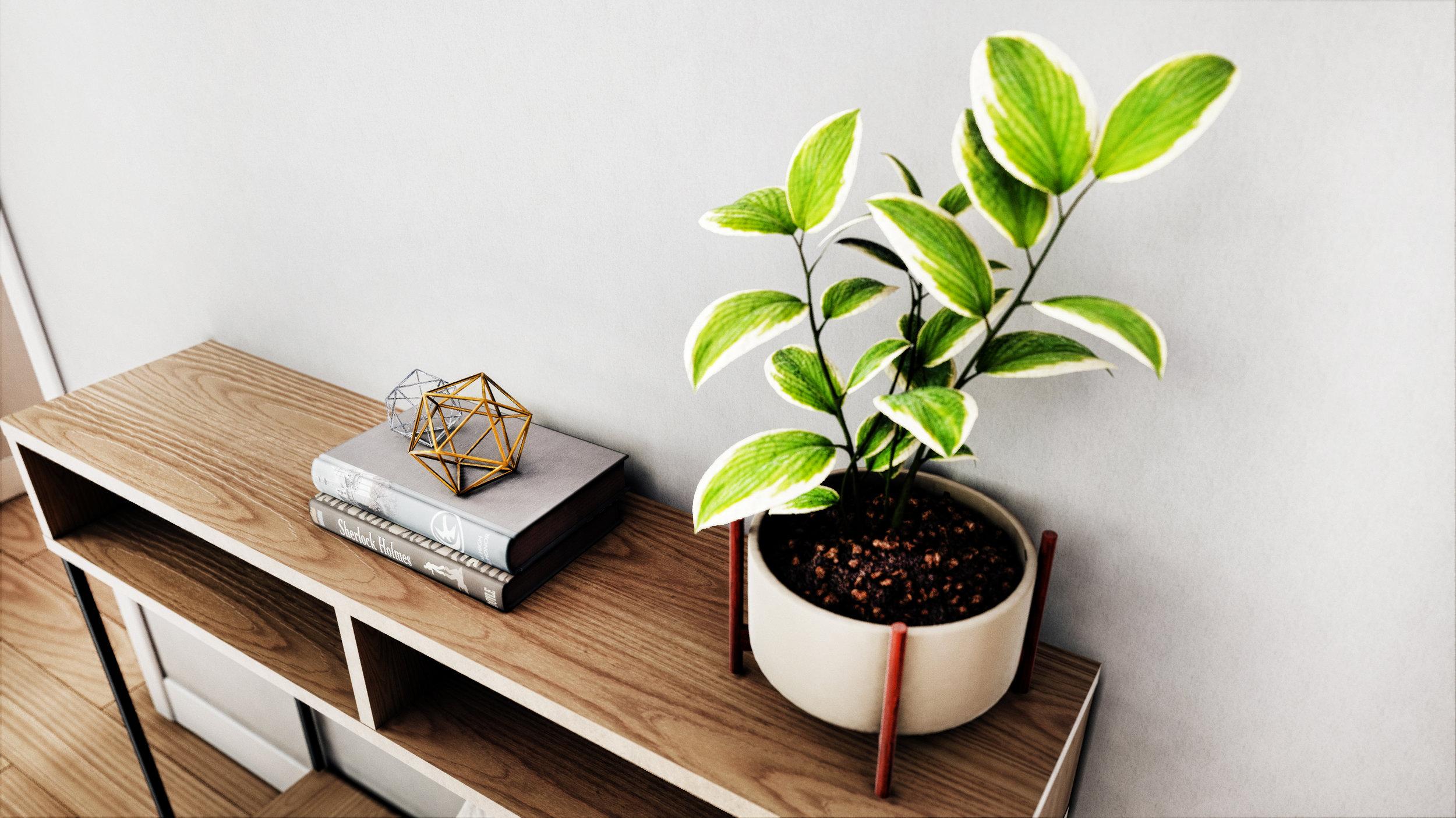 Plant2.jpg
