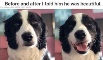dog_low.jpg