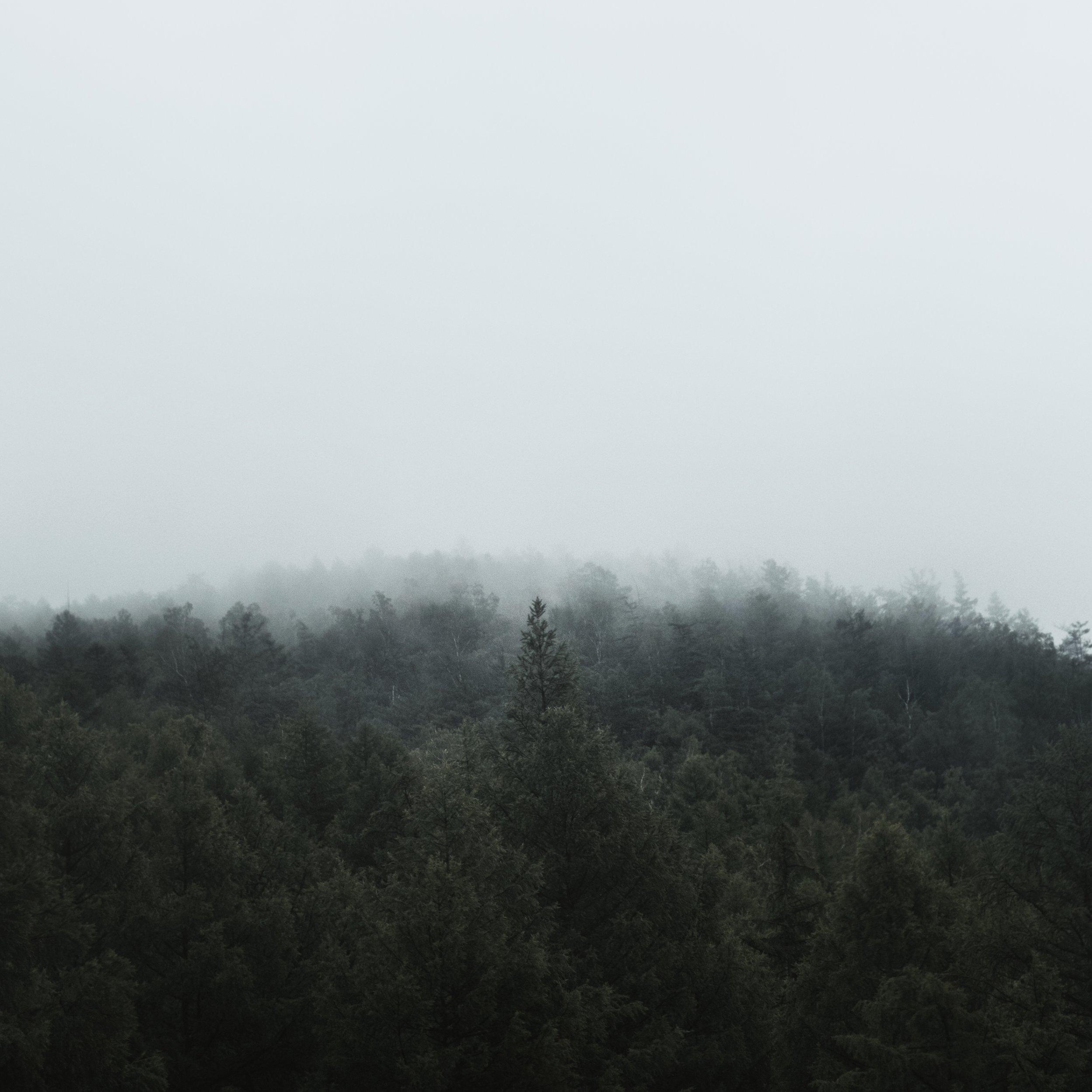 2018-06-18 170416.jpg