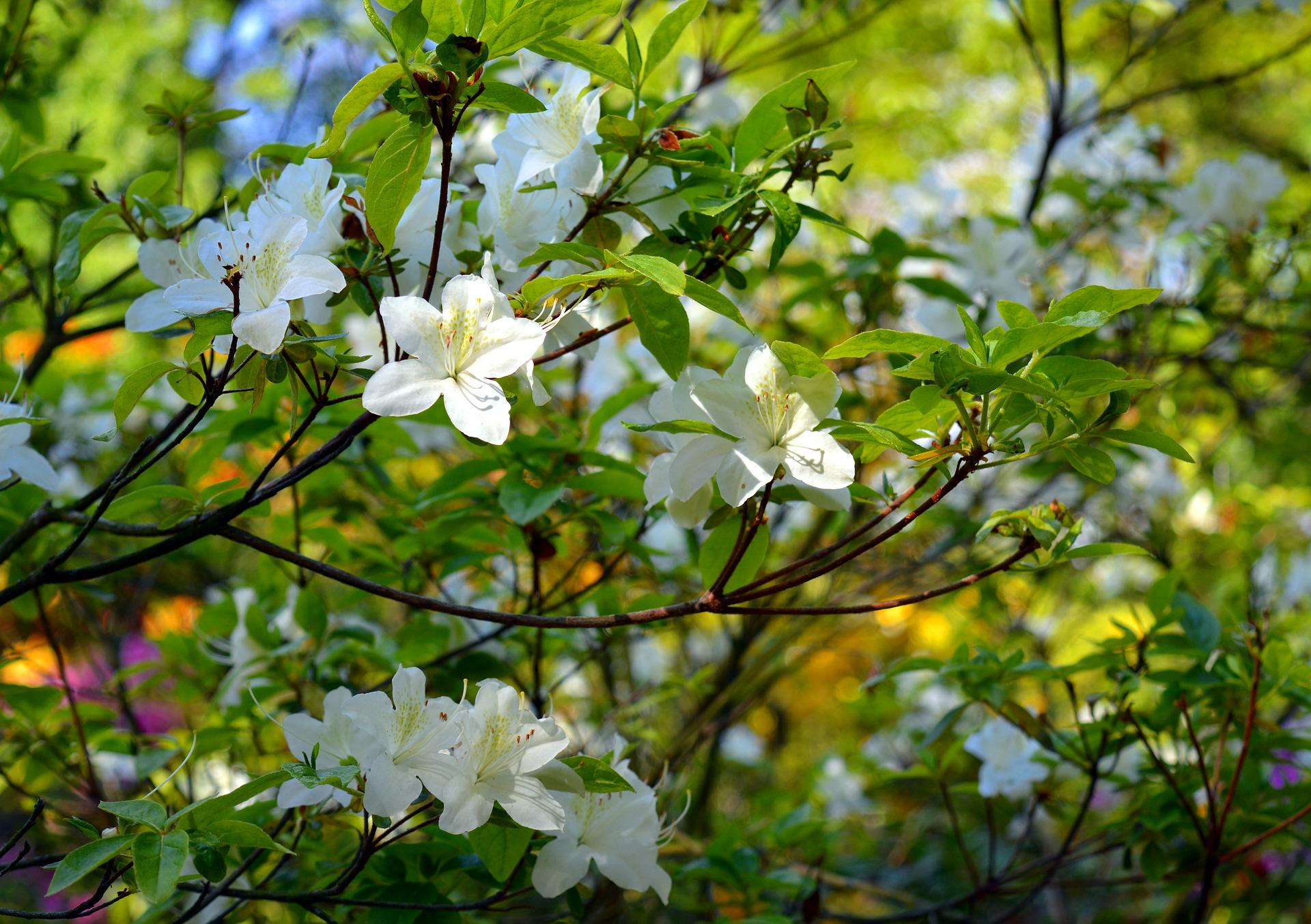 apple-tree-360083_1920.jpg