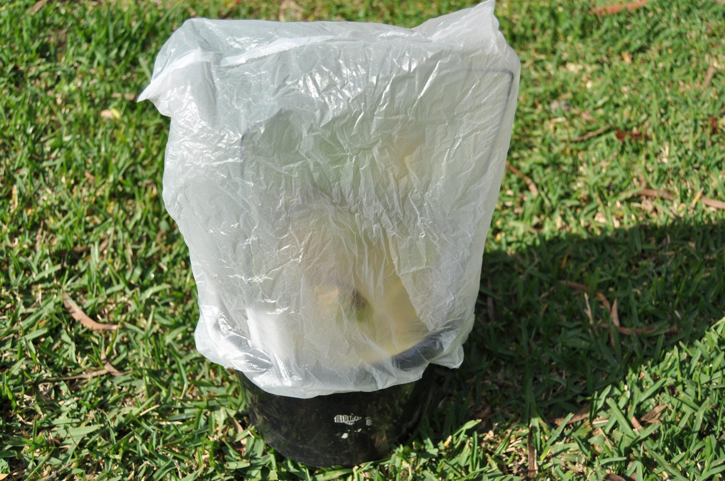 Plastic bag incubator