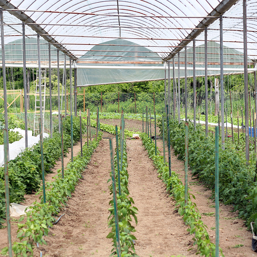 IBC inside Greenhouse-square.jpg