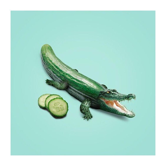 🐊FRIDAY FEELING🐊 Garden Theory wish you a great weekend 🥒💦 . . . . #gardentheory #veggiesoda #soda #gourmetsoda #vegetables #food #local #fennel #softdrink #cucumber #soonweekend #bubbles #funfriday #entrepreneurlife #startup #dk #organic