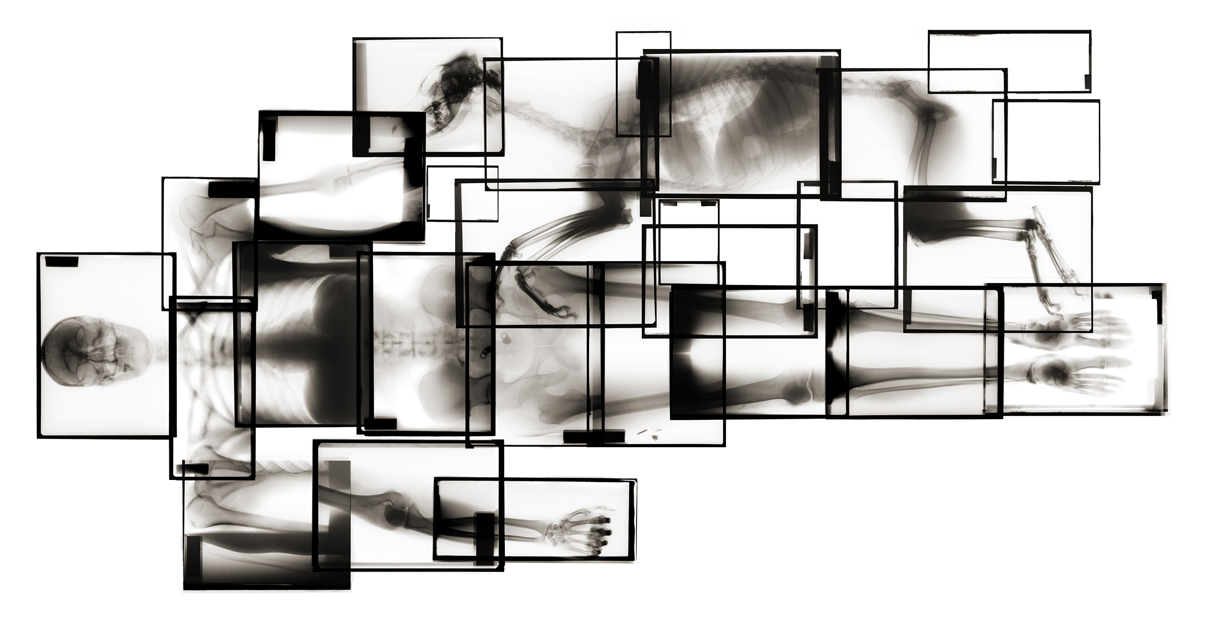 Extended Self Portrait / X-ray with best friend, Taa-Taa, the Rhodesian Ridgeback :  X-ray executed at Animal Clinic facility in Kristiansand, Norway in 2008. Archival Pigment Print on iBond plate. 200 x 100 cm / 78 x 33 in 2008