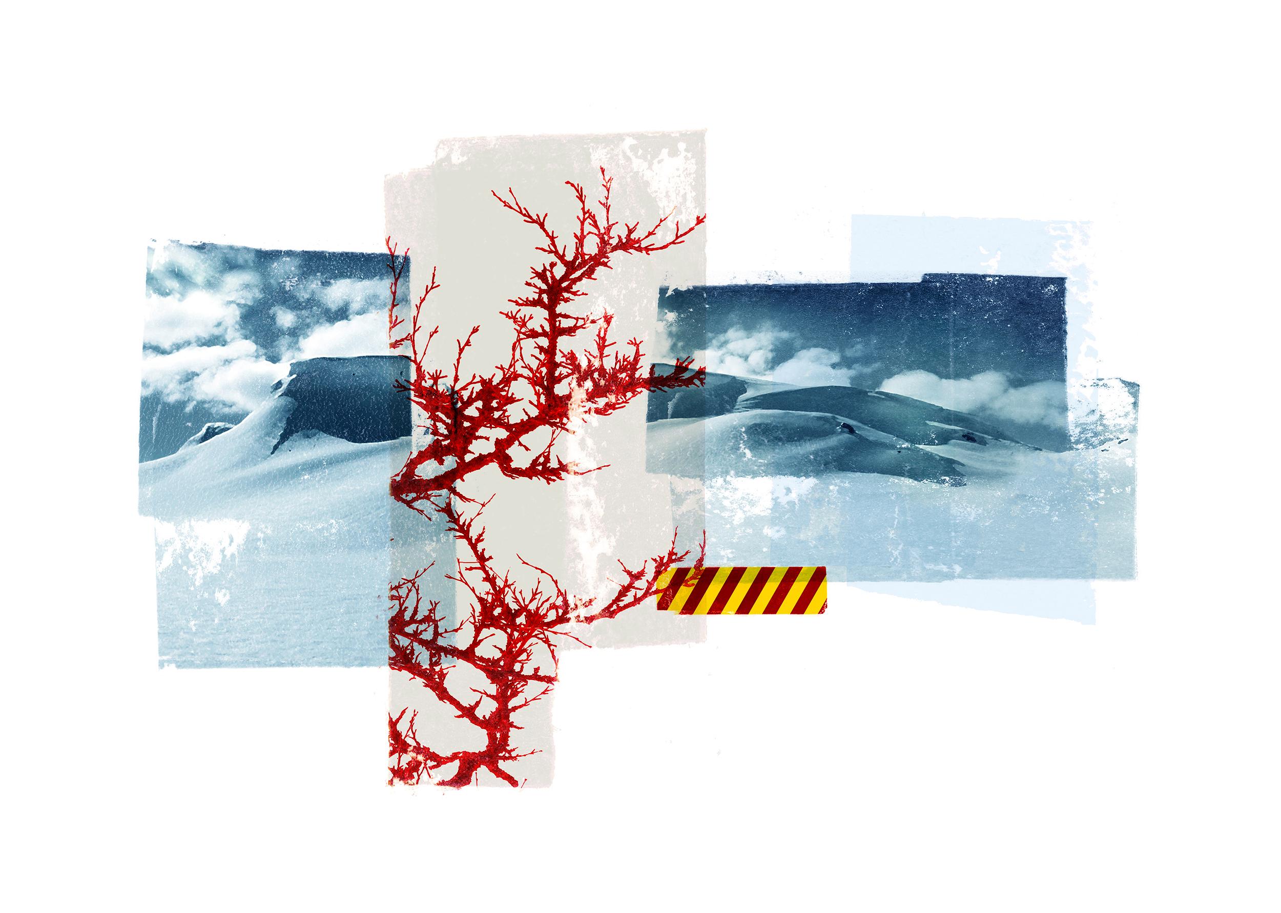 Reservoir / Red birch / Skavl ( Setesdal )  Photo litho / BFK Rives 250 gr 35 x 25 cm / 13,7 x 10 in Edition of 100 + 20 Ap Editeur: IDEM PARIS / Per Fronth Studios   21/2015:
