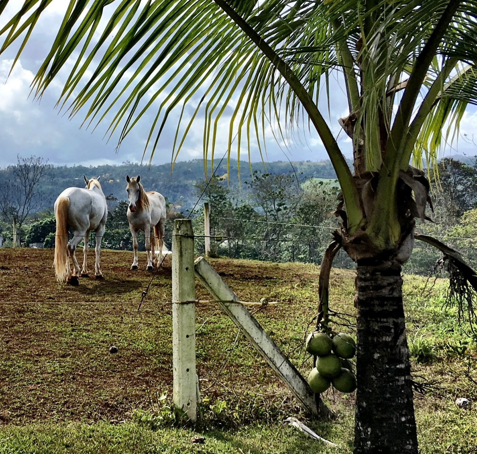 The Dreamcatchers offer blind itinerary adventure trips in Costa Rica