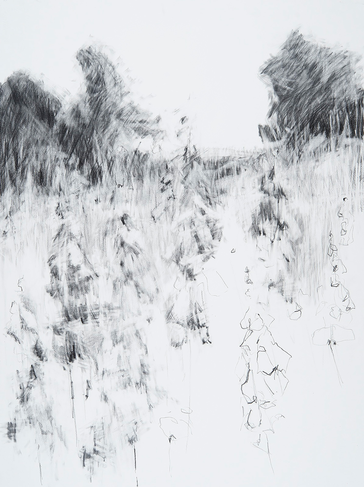 Foxgloves, Kestle Barton.  Graphite on paper. 77 x 57cm  Sold