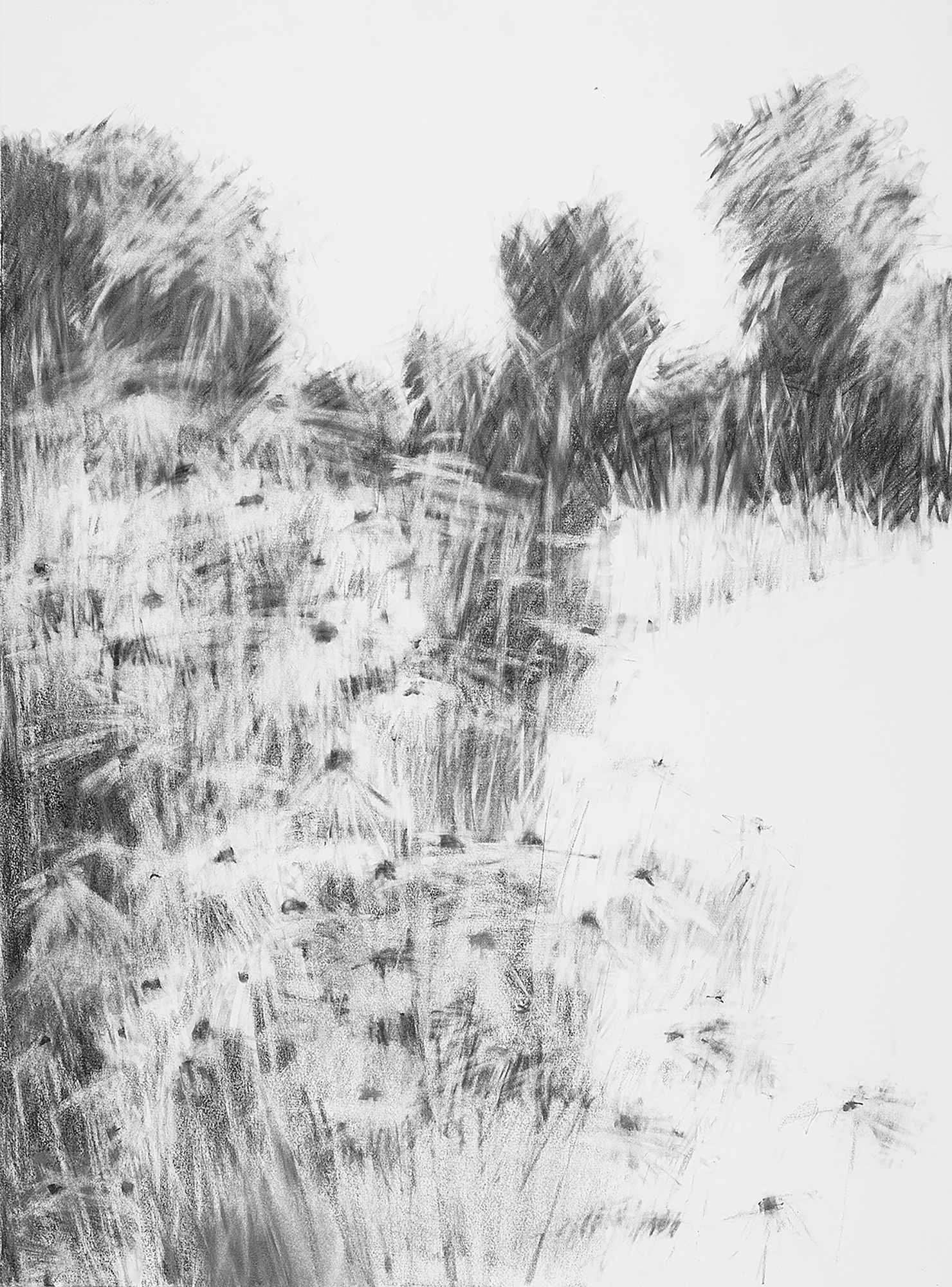 Summer Border, Kestle Barton Garden.  Graphite on Paper. 77 x 57cm.  Sold