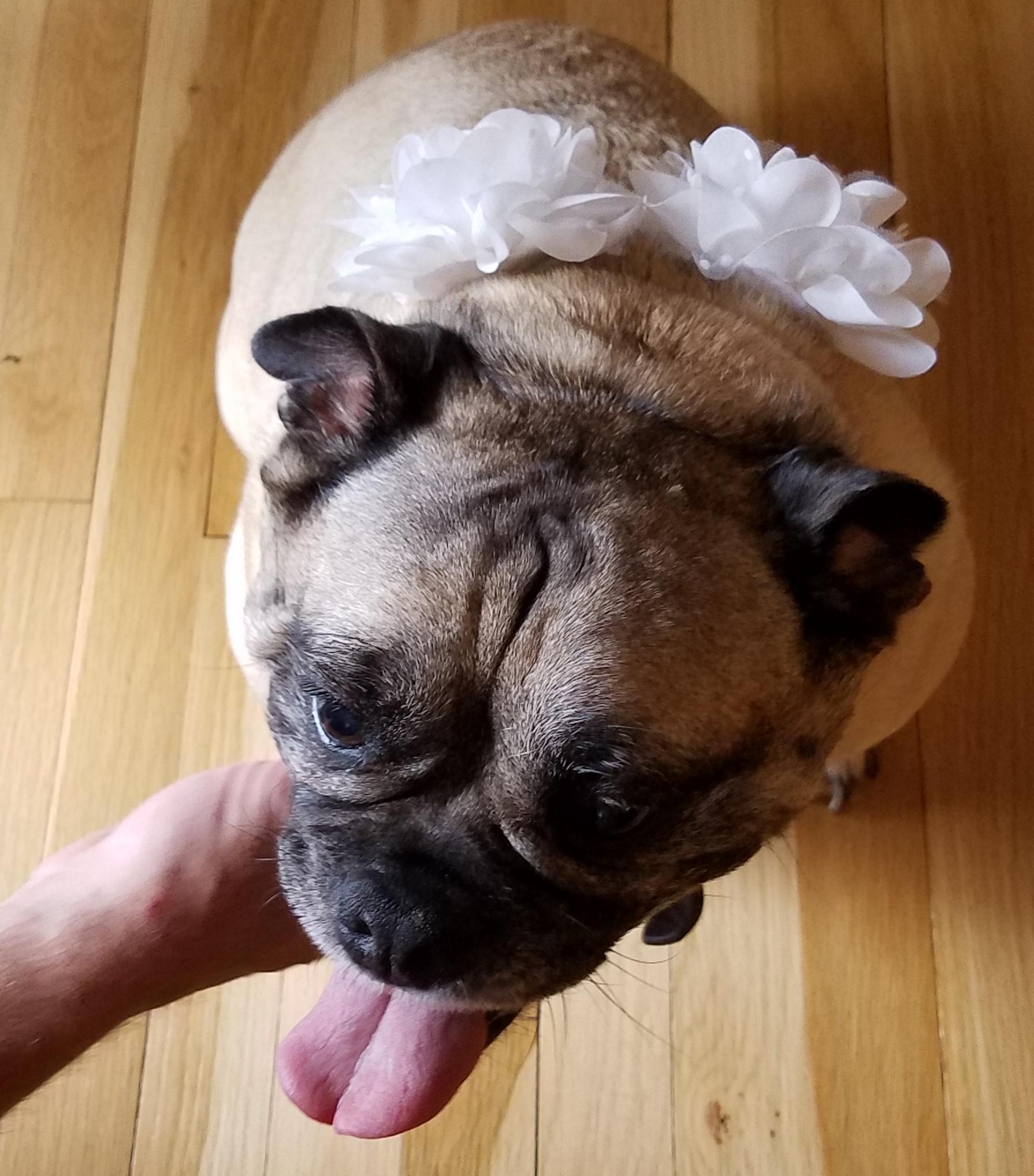 Maid of Honor Millie