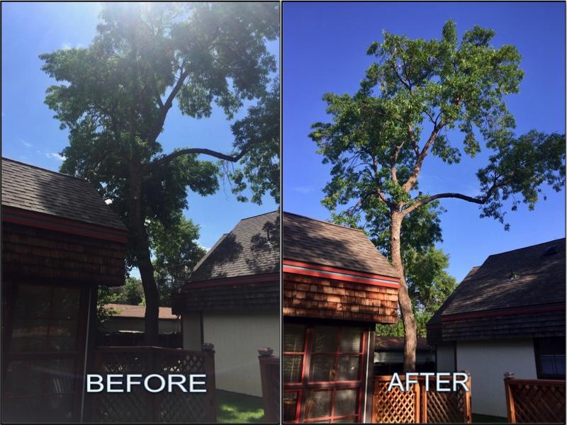 Tree Job.jpg