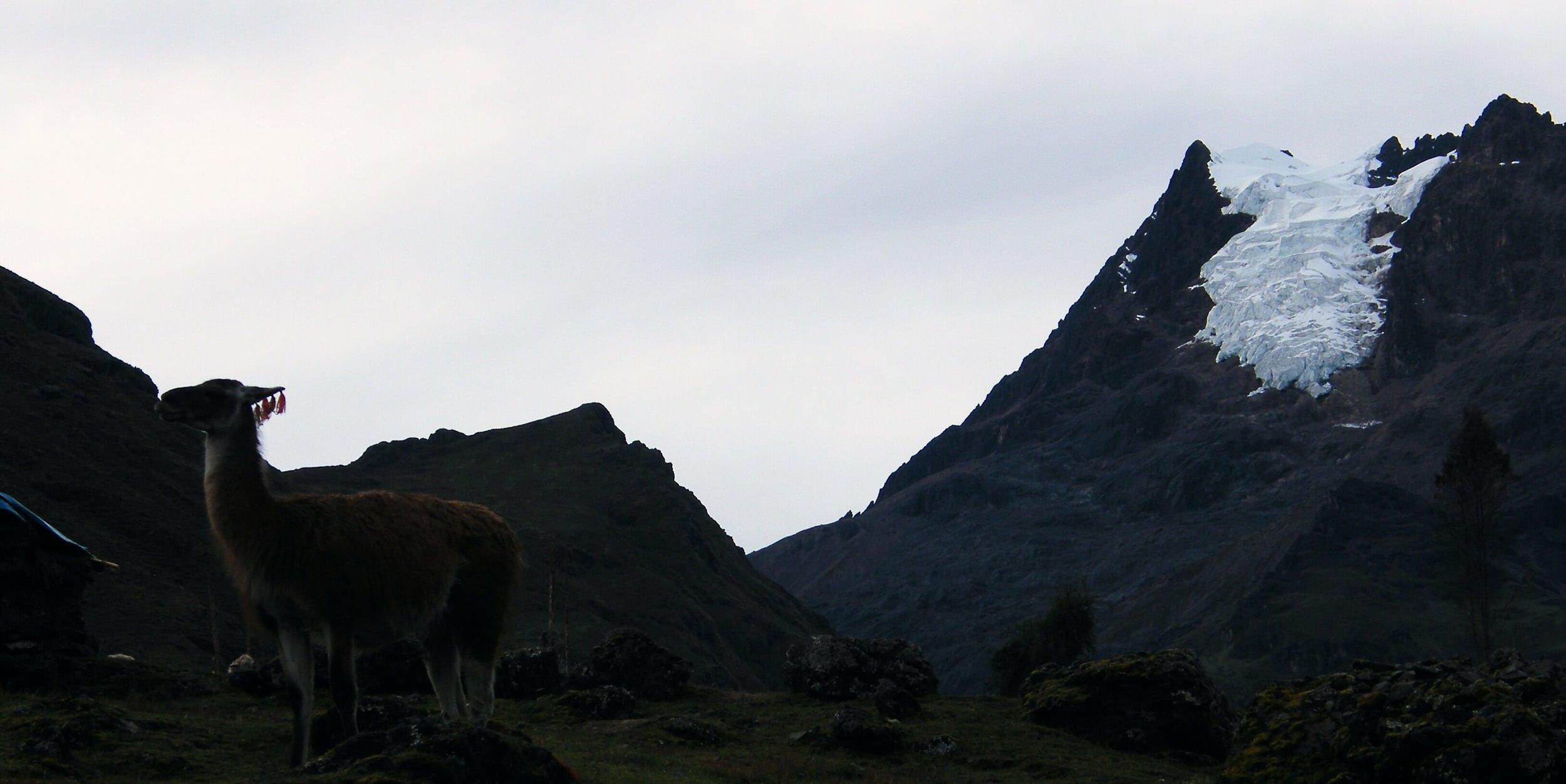 Hiking Peru   Lares Trek & Machu Picchu    Book This Tour