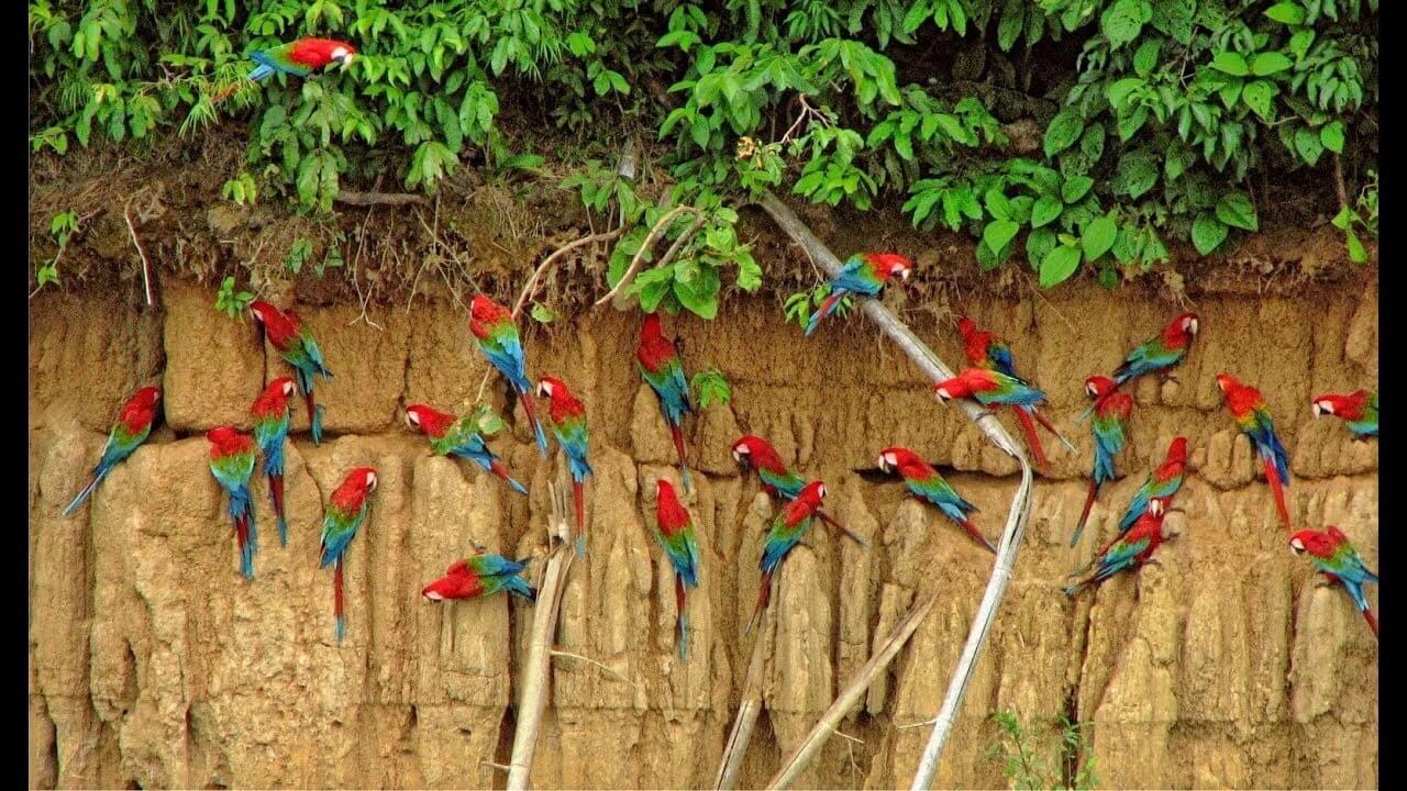 Cultural Peru   Manu, The Cultural Tour    Book This Tour