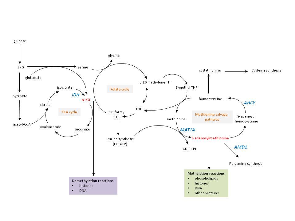 metabolic pathways.jpg