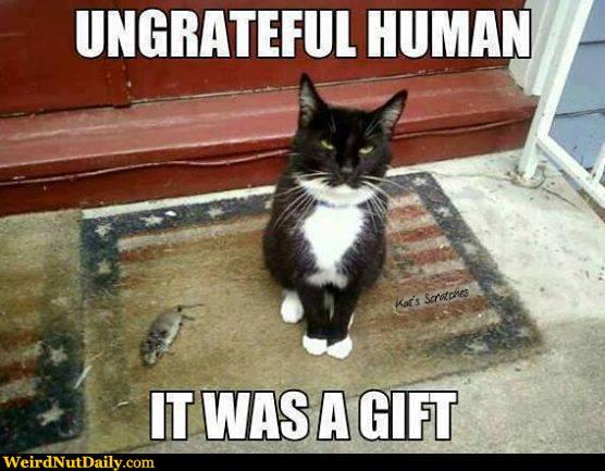 cat-bring-dead-animal.jpg