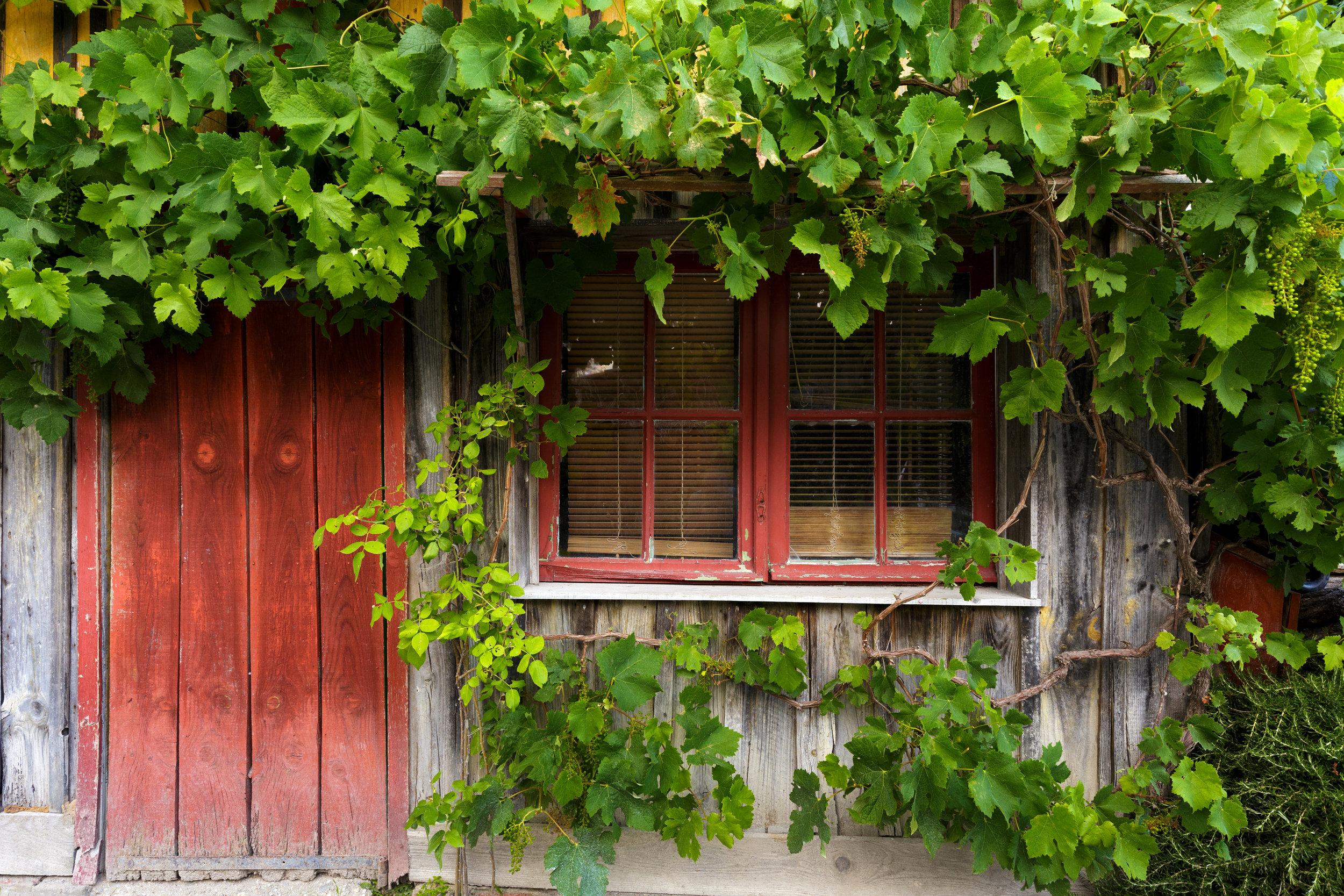 bordeaux_bigstock-Grapevine-climbing-on-ancient--158218802.jpg
