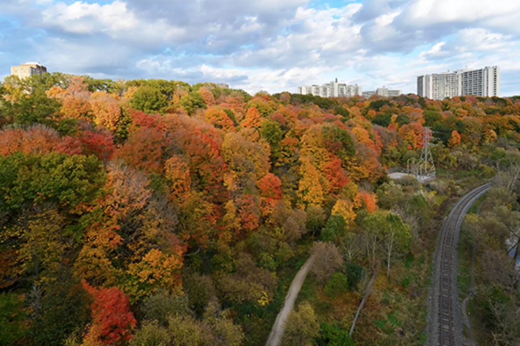 Visit the Don River Trails - You don't need to leave the city to enjoy the autumn foliage! Various trails along the centrally located Don River provide a perfect and accessible way to enjoy the changing autumn colours