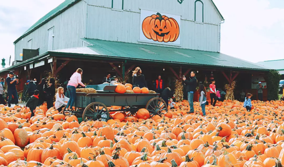 Go Pumpkin Picking - There's no shortage of local farms and pumpkin patches in and near the city! Regardless of where you're situated there's ample opportunities to take part in this autumn staple.