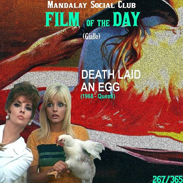 Day 267/365: Death Laid an Egg (Dir. Guilio Questi) - 1968 🇮🇹 —- The Giallo genre proved that while it had specific tropes, was capable of expanding beyond that to make truly quirky films like A Lizard in a Woman's Skin. Death Laid an Egg is an even earlier example of how different gialli could be! —- SWIPE ➡️ to see our favorite scene from Death Laid an Egg! —- In a more French New Wave style approach, Death Laid an Egg centers on a triangle of people living on a farm, all trying to forward their own agenda. A young woman attempts to coerce both her lover and his wife to take each other out .