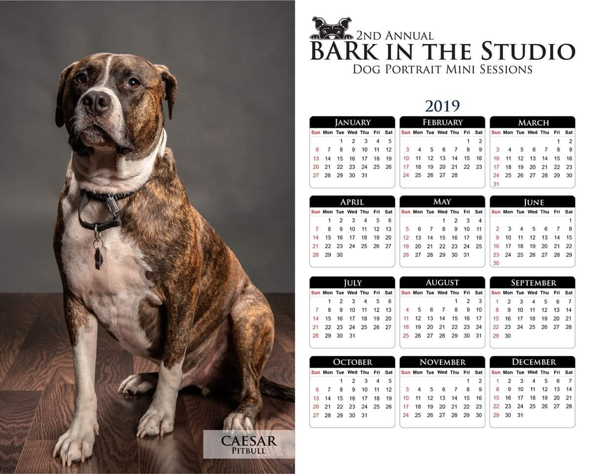 This is an example of the 8x10 2019 Calendar Print that everyone will get with their dog's session this year.
