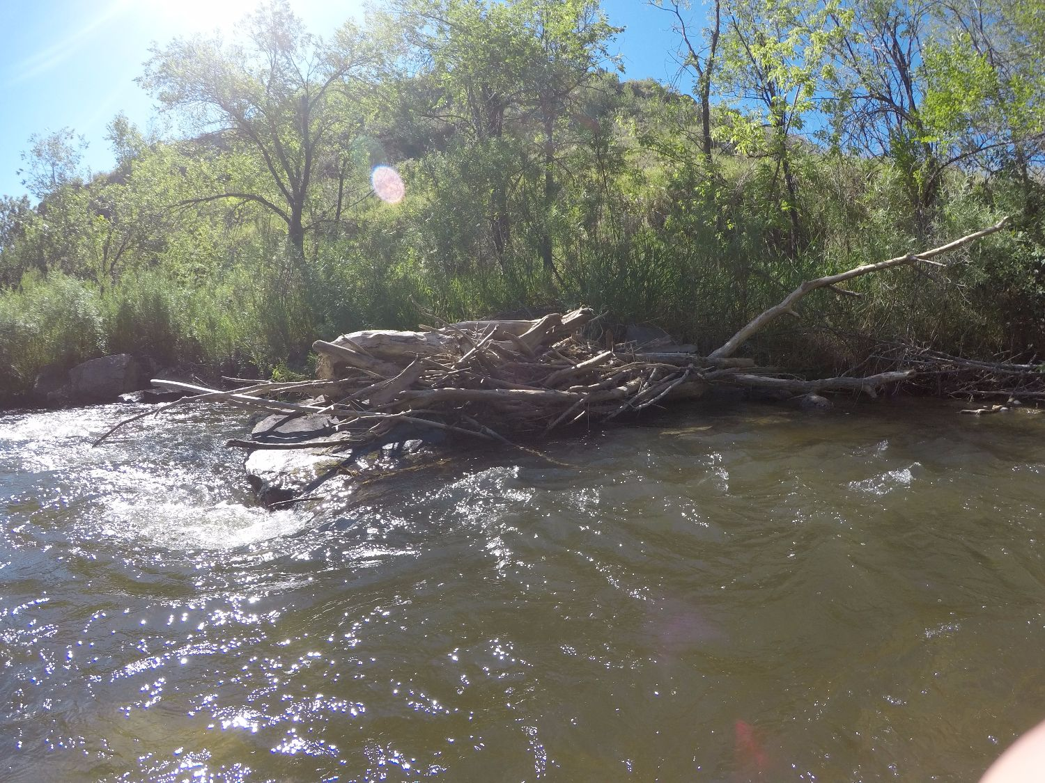 """""""Snags"""" caused by fallen trees in the channel can provide great habitat, but can be a hazard to humans."""