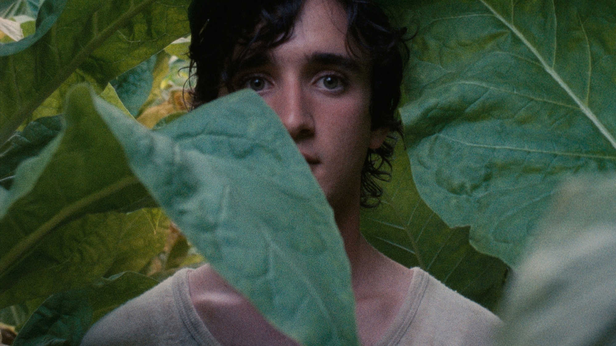 9. Happy as Lazzaro (dir. Alice Rohrwacher) - Lazzaro, a good-hearted young peasant, and Tancredi, a young nobleman cursed by his imagination, form a life-altering bond when Tancredi asks Lazzaro to help him orchestrate his own kidnapping.