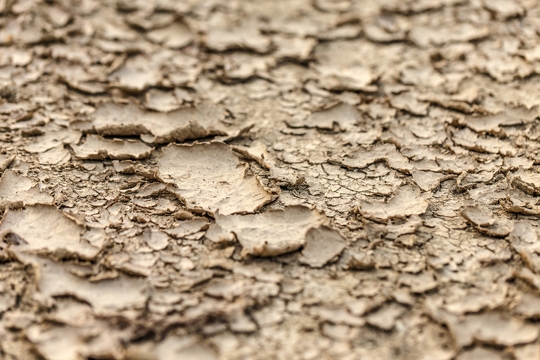 damaged soil