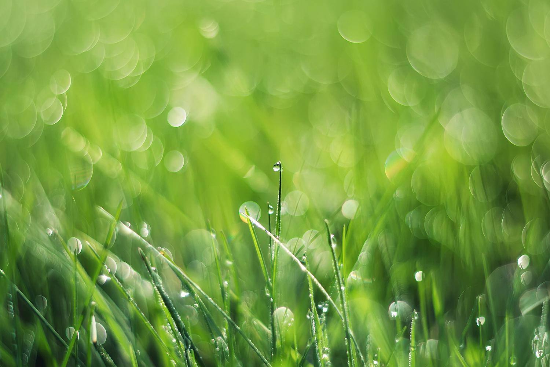 Wet grass after irrigation